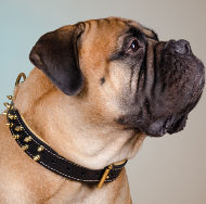 Bullmastiff Collar of Two-Ply Leather & Nappa with Brass Spikes