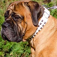 Bullmastiff Collar White Leather with Caterpillar Square Studs