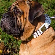 Bullmastiff Dog Collar of White Leather with Plates and Spikes