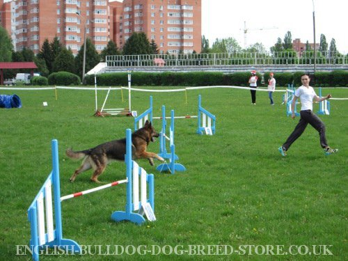 Dog Agility Levels