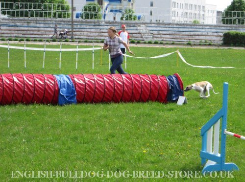Dog Agility Equipment UK