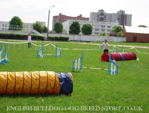 Dog Agility Obstacles