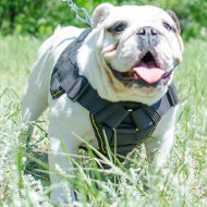 Dog Chest Harness UK for English Bulldog, Nylon Dog Harness UK