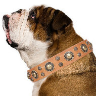 "Dog Collar English Bulldog ""Sophisticated Glamor"" Artisan"