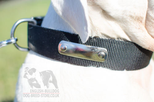 Personalized Dog Collar for Bulldog