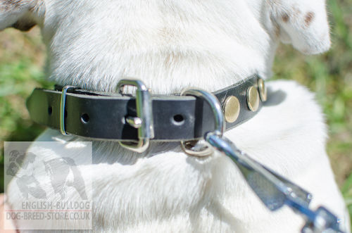 Bulldog Collar