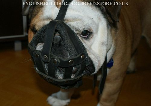 Leather Dog Muzzle for Sale