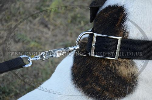 Dog Collar Belt Buckle