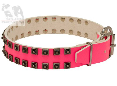 Bulldog Collars