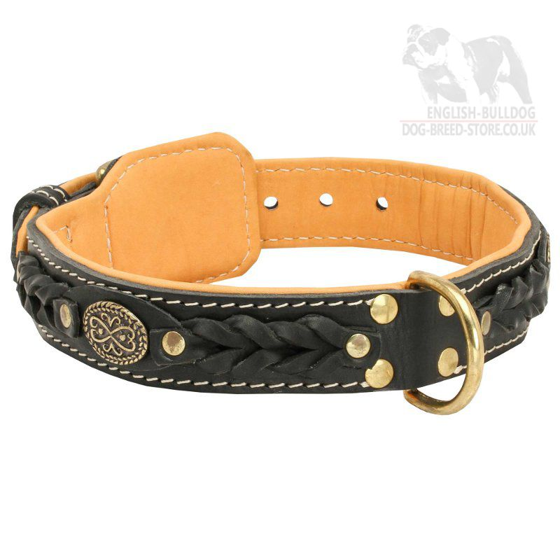 What To Do With Old Dog Collar Uk