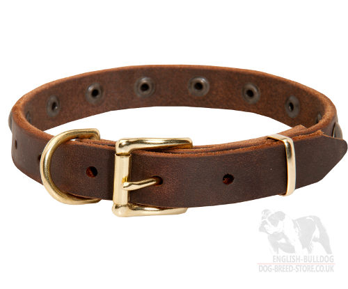 Narrow Leather Collar with Brass Details for Boston Terrier