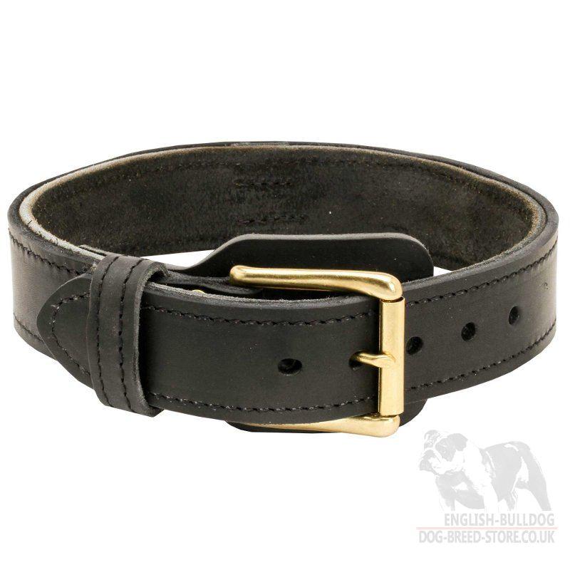 Most Comfortable Dog Collar Uk