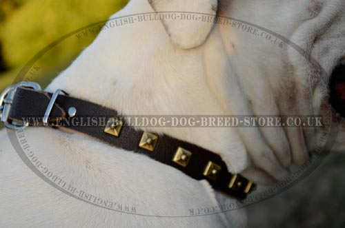 American Bulldog Collar UK