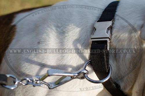 Dog Collar Quick-Release Buckle