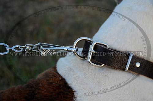 American Bulldog Leather Collar