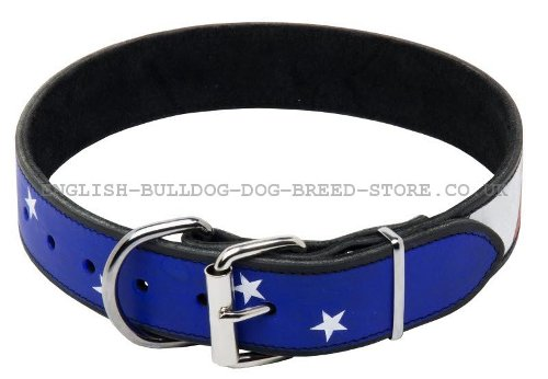 Best Bulldog Collar