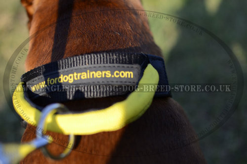Best Dog Collar for a Boxer