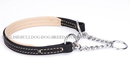Best Training Collar for English Bulldog