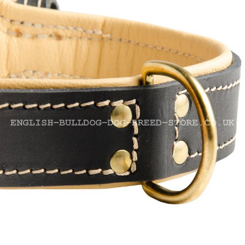 Leather Collar for Bulldog