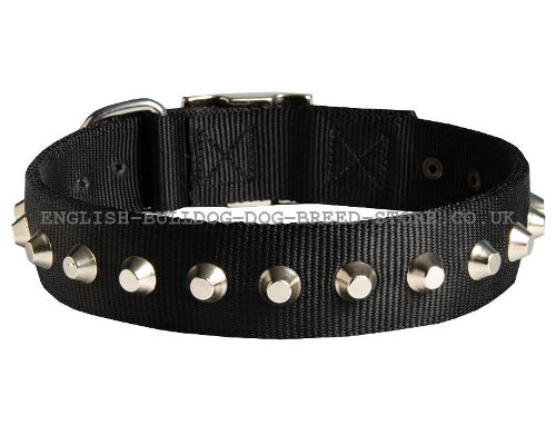 Bulldog Collar UK Nylon