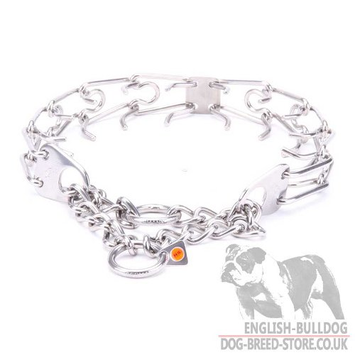 Bulldog Collar UK with Prongs