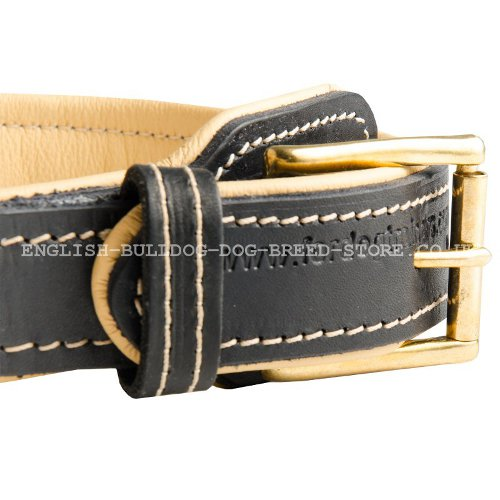 Leather Collars for Bulldogs