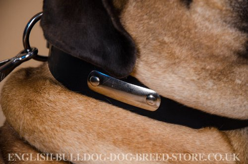 Dog Collar with ID Tag