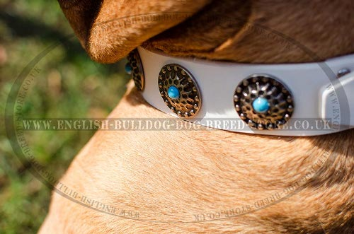 Bullmastiff Dog Collar