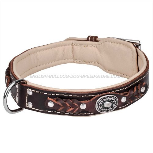 Dog Collar for English Bulldog
