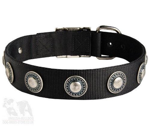 Dog Collar for Boxer