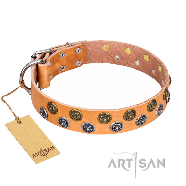 English Bulldog Leather Collar