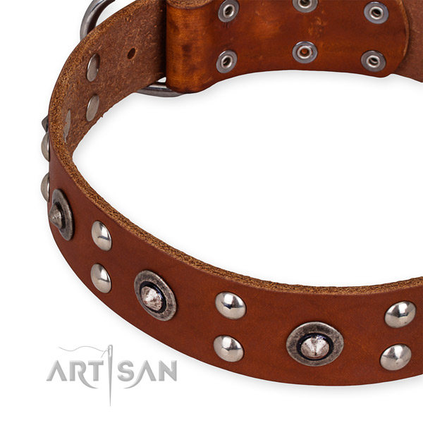 English Bulldog Collar UK