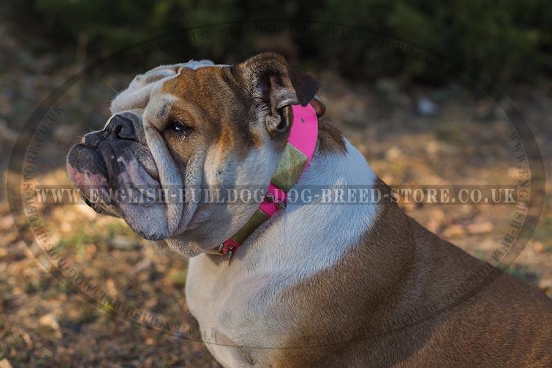 Female English Bulldog Collar in Pink Leather - £88.20