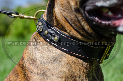 Leather Collars for Boxers