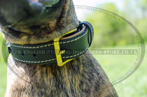 Leather Dog Collars for Boxers