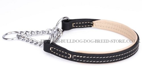 Martingale Collar English Bulldog