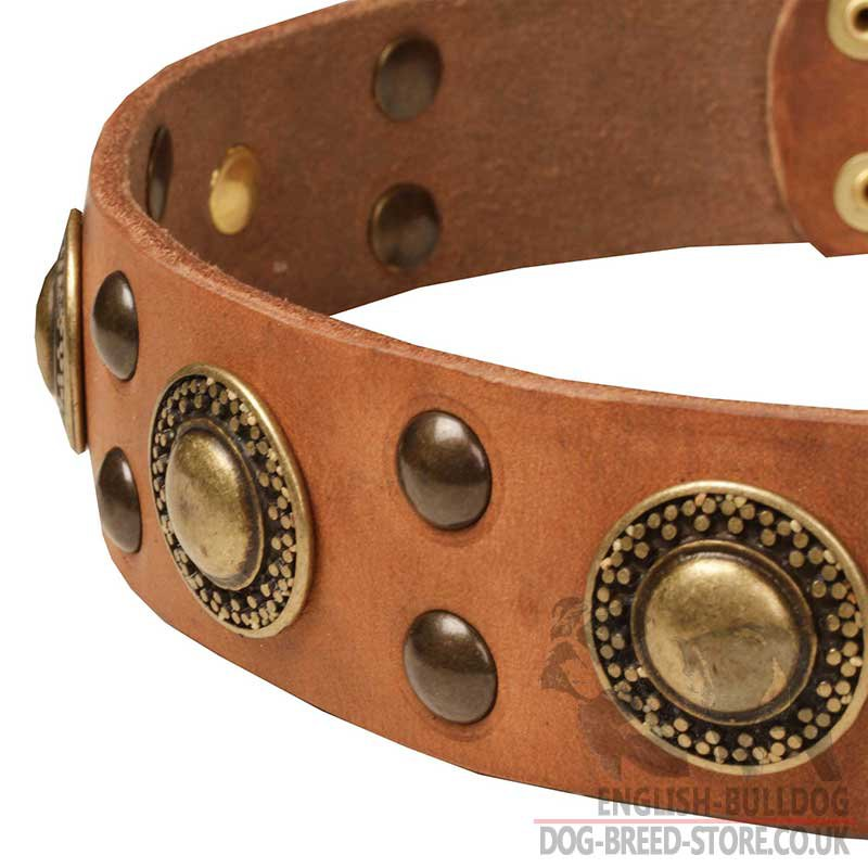 Bulldog Collar In Modern Design