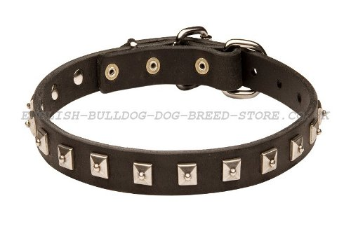 Thin Dog Collars