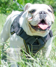 Best Dog Harness Nylon