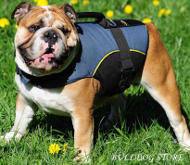 Vest Harness for Bulldog