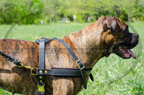 Boxer Dog Leather Harness