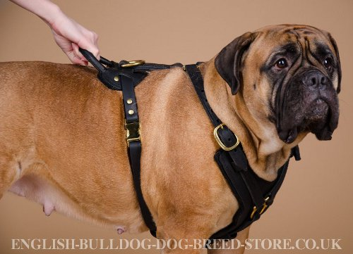 Dog Harness for Bullmastiff UK