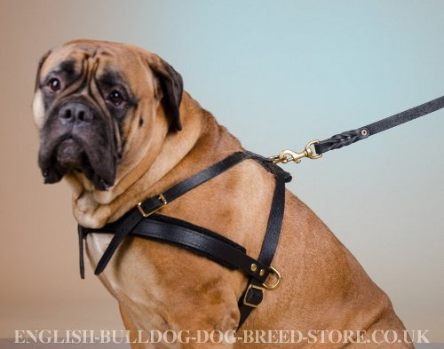 Weight Pulling Harness for Bullmastiff UK