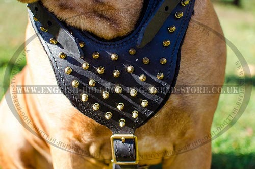Dog Harness Bullmastiff UK