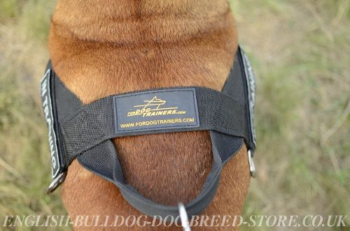 Dog Harness with Handle UK
