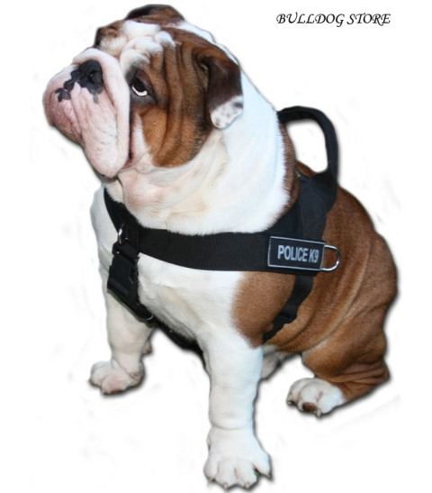 english bulldog training nylon dog harness with patches for english bulldog 4862