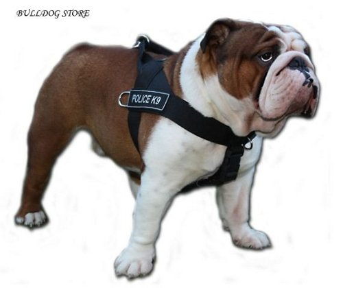 Bulldog Harness for Sale