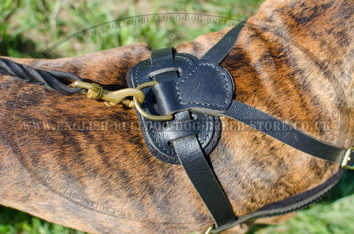 Leather Dog Harness for Boxer