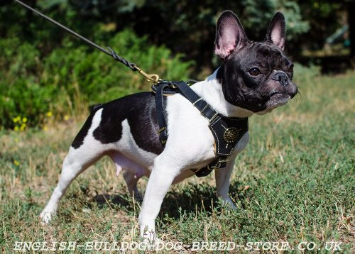 Padded Leather Dog Harness for French Bulldog