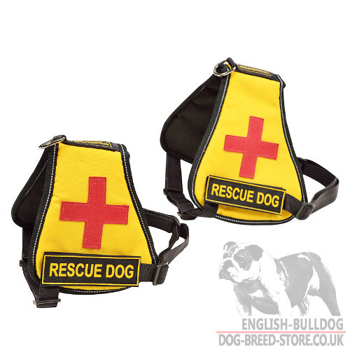 Service Dog Vest French Bulldog